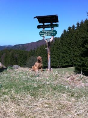 Wanderungen mit Hund in Gehlberg bei Oberhof